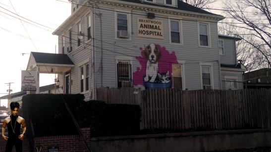 animal hospital prince